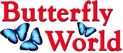 butterflyworld.com